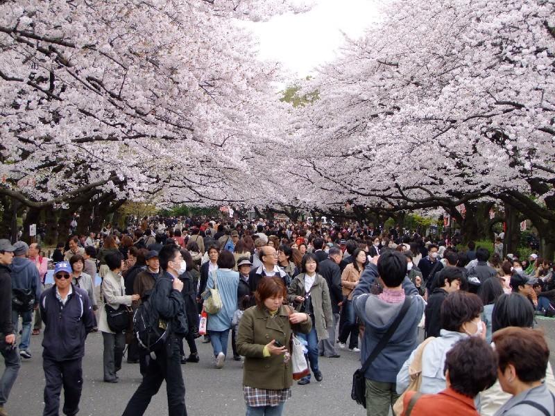 Bekanntschaften japan