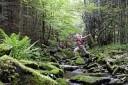 bayrischer-wald-wander-natur