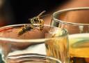 wespen-insekten