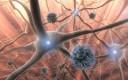 viren und nervenzellen 1