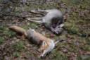 jagd-jagen-jaeger